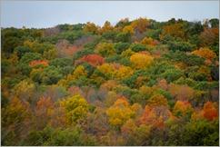 Fall ColorsIMG_9561