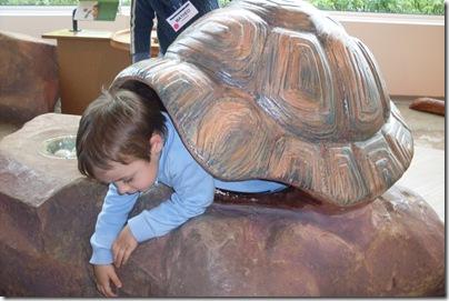 Aj-tartaruga al Museo della scienza di Strasburgo