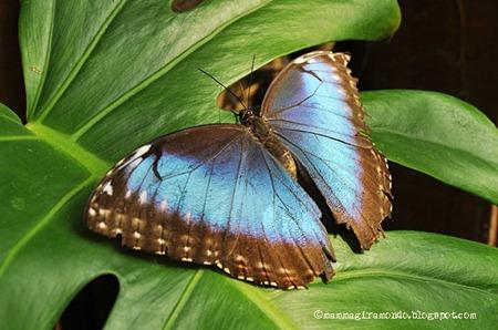 casa delle farfalleDSC_1081