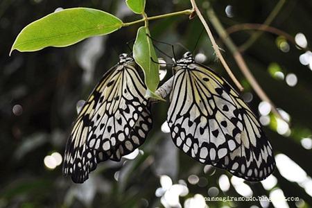 casa delle farfalleDSC_1090