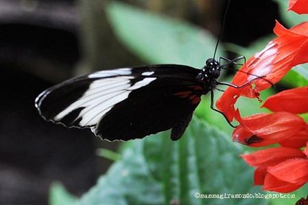 casa delle farfalleDSC_0936