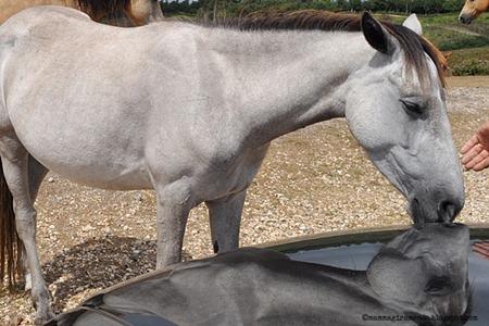 cavalli  selvaggi nella new forestDSC_0909