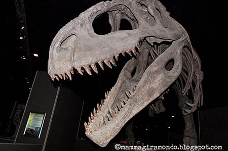 Dinosauri della PatagoniaDSC_1211