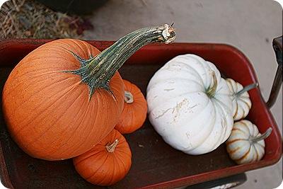 Daisy Month 19_pumpkinpatching 031