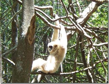 12-03-2009 019 Monkeyland