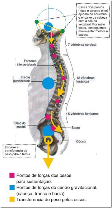 pontos de forças coluna