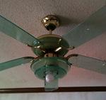 ugly fan