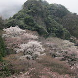 長崎の山桜、樹氷、棚田などなどアルバムUPしました。