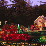 Holiday Lights, Shore Acres State Park, Oregon.jpg