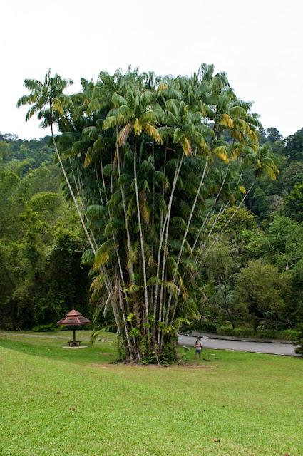 Penang Hill и Ботанический сад
