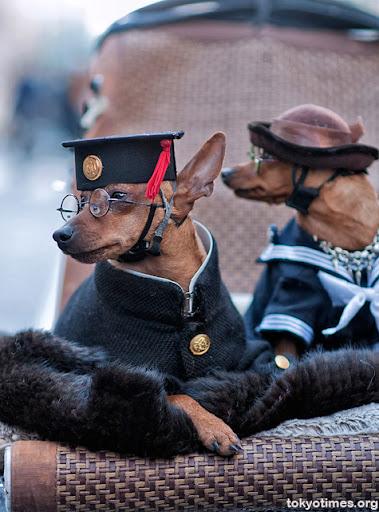 японские собаки в Гиндза