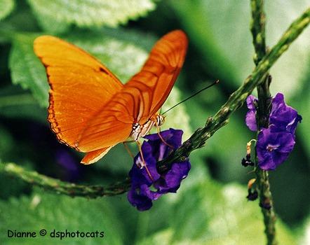 IMG_0010 Orange Butterfly