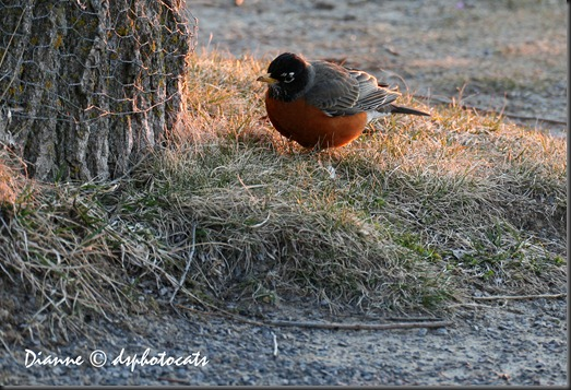 Good Morning Mr. Robin