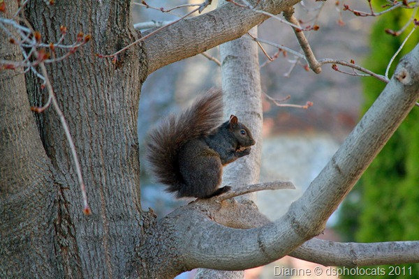 IMG_2644 Squirrel.