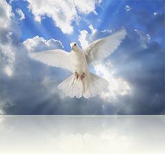 s_white_dove_2_