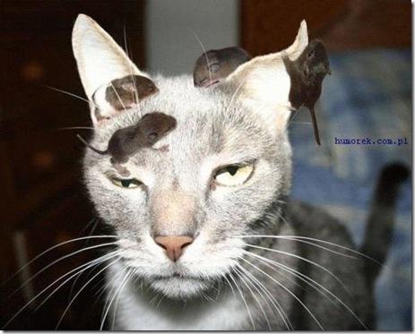 kot_myszy