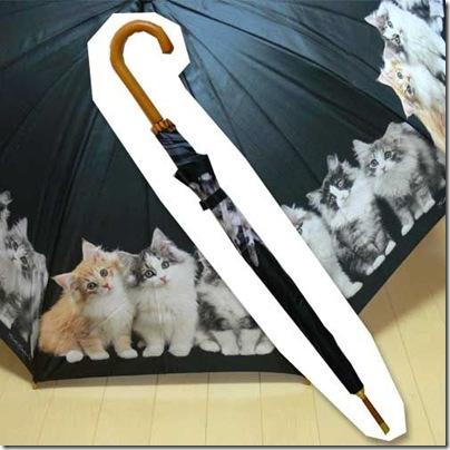 parasol_w_koty