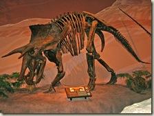 Dinosaur Museum 03