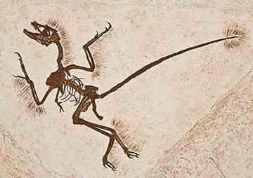 Tiny Dinosaur Unearthed Above Arctic Circle China-Dinosaurs-Microraptor-9_thumb%5B3%5D