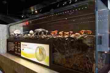 An exhibit on how mushrooms grow is part of the larger exhibit How Nature Works. 