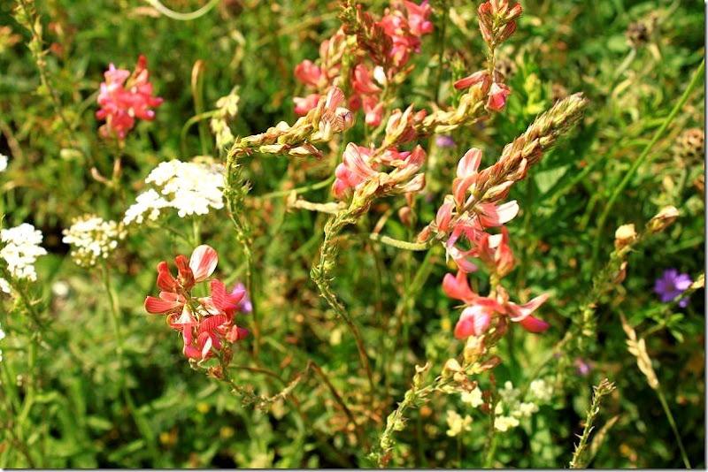 la fiorita- monte vetore 030 []