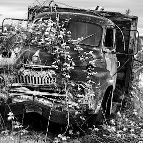 Stands the Test of Time by Jesse Brown - Transportation Automobiles ( #upperleftusa, #oldgold, #testoftime, #oregon, #blacknwhite, #pnc,  )
