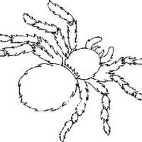 insecte5p.jpg