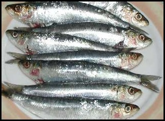 sardines