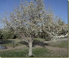 April 2010 371