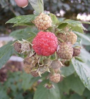October2010 054