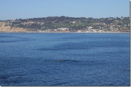 San Diego Beaches 114