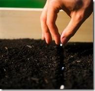 20070810161221-plantando