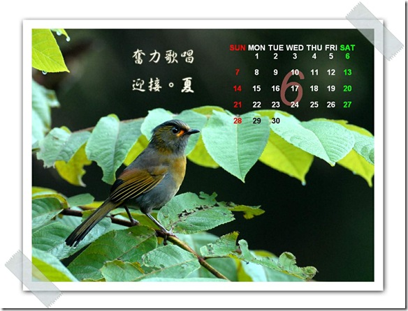 6月  藪鳥(攝於  溪頭台大實驗林)