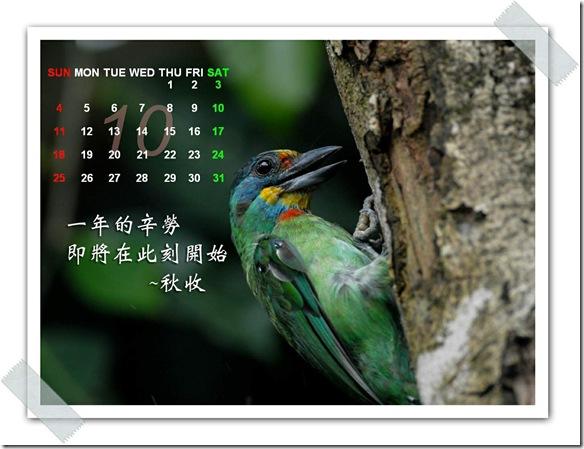 10月 五色鳥(攝於 兆豐農場)