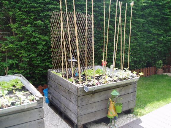 du nouveau dans le potager dans jardin potager en carré