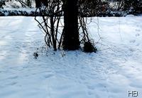 Trampelpfade der Singvogel im Schnee © H. Brune