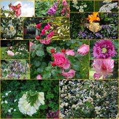 Gartenbilder © H. Brune
