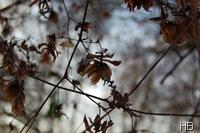 Hopfen im Winter © H. Brune