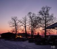 Eichen auf dem Hof Brune © H. Brune