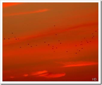 Sonnenuntergang mit Vögeln © H. Brune