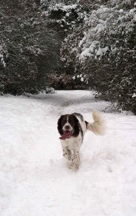 snowy-woods-18