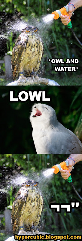 OWL_AND_WATER_LOWL