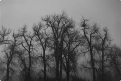 Winter Trees, Ketring Park, Littleton, Colorado taken with a Lavec camera by Joe Beine
