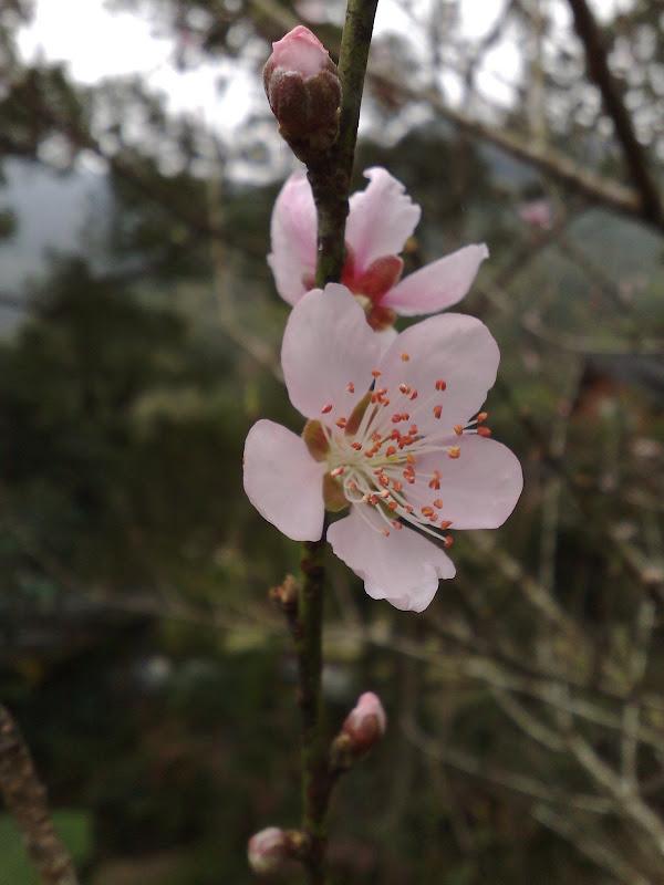 桃源仙谷by nokia N95