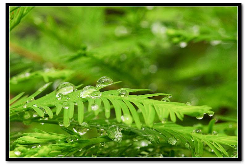 20100418 下雨天林口瘋子團。     (遲交作業)