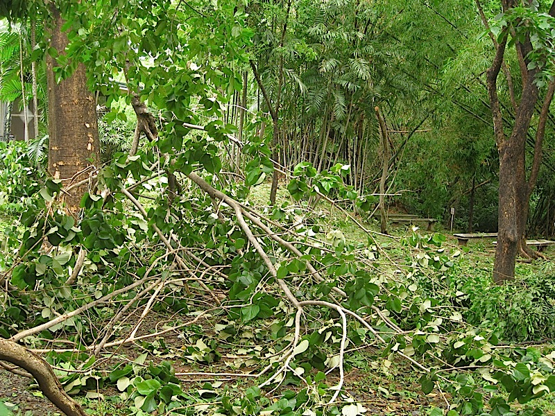 aftermath of typhoon Basyang (Conson)