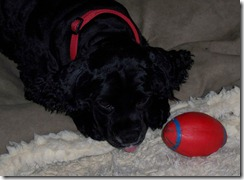 Maggie and her ball