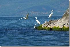 Lago di Prespa