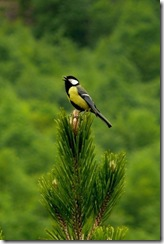 Natura in Albania (2)