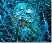 Immerssione subacquea (2)